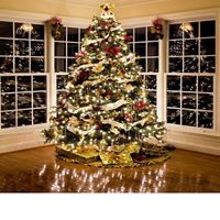 Picture for category Christmas Tree Lights