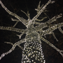 Picture of 50 LED Pure White LED Christmas Lights 11' Long on Black Wire
